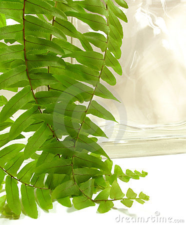 Free Boston Fern Royalty Free Stock Image - 11602016