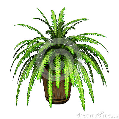 Free Boston Fern Stock Photos - 59394713