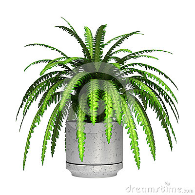 Free Boston Fern Stock Images - 59582414