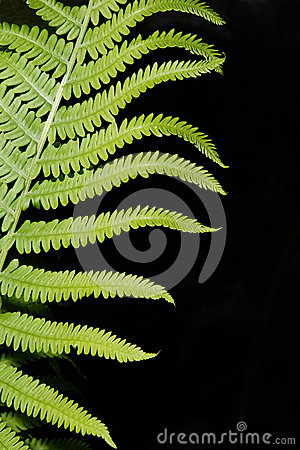 Boston Fern Abstract