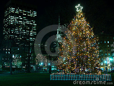 Boston s Christmas Tree