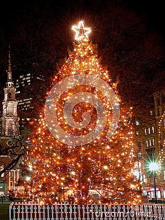 Boston s Christmas Tree