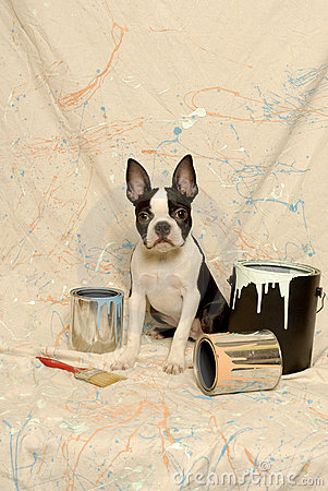 Free Boston Terrier And Paint Can Splatter Royalty Free Stock Photos - 23211378