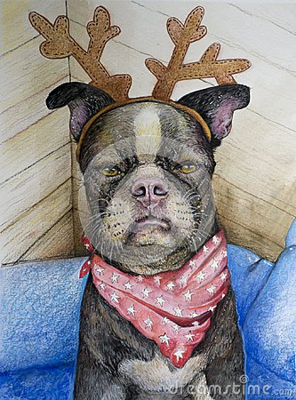 Free Boston Terrier With Reindeer Antlers Royalty Free Stock Photography - 104602657