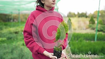 Botánica Científica joven sosteniendo en sus manos una semilla de thuja verde Amor por la naturaleza y el medio ambiente almacen de video