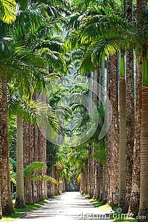 Botanical garden. Rio de Janeiro