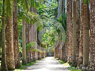 The Botanical Garden in Rio de Janeiro