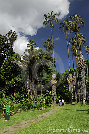 Botanical Gardens in Caracas
