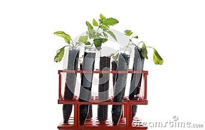 Botanical research