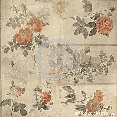 Botanical vintage roses shabby chic background