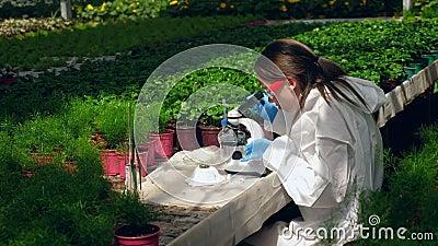 Botanika pracuje z mikroskopem w szklarni zbiory wideo