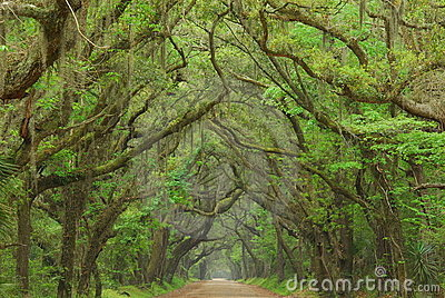 Botany Bay Road, Charleston, South Carolina