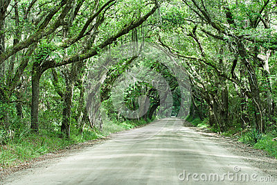Botany Bay Road Live Oak Tunnel South Carolina