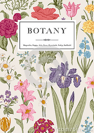 Free Botany. Vintage Floral Card. Royalty Free Stock Image - 51346016