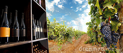 Botella y viñedo de vino