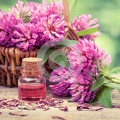 Free Bottle Of Elixir Or Essential Oil And Clover In Basket. Royalty Free Stock Image - 55788236