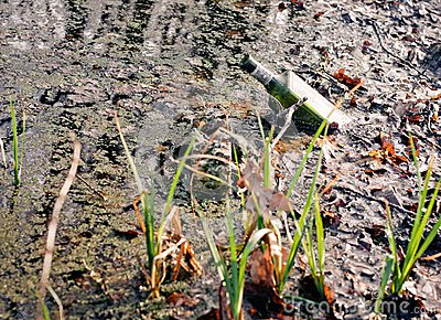 Bottle in the swamp