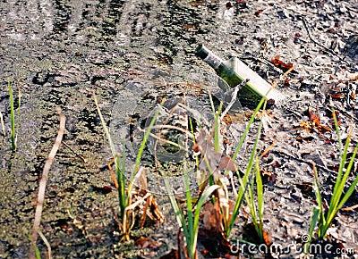 Bottle in the swamp
