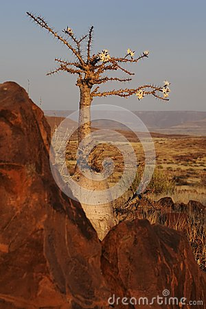 Bottle tree and stone