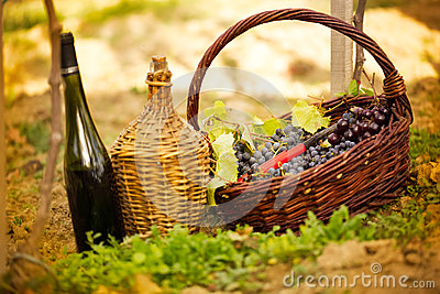 Bottle of wine and grapes in basket