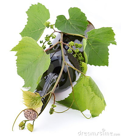 Bottle of wine teined with vine