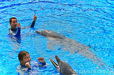 Bottlenose dolphins with trainers Editorial Photography