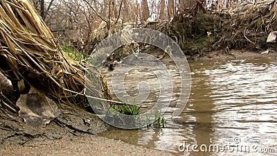 (Boucle parfaite) Sandy Shallow Barren Creek Shot de côté banque de vidéos
