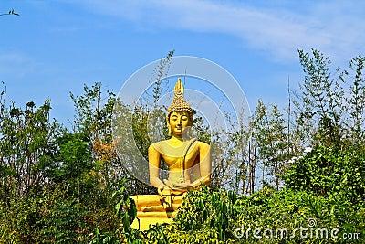 Bouddha dans la forêt