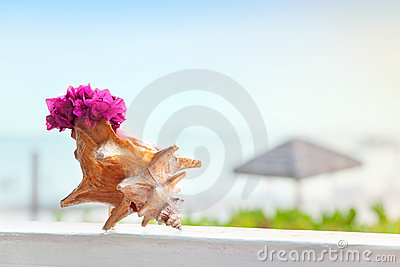 Bougainvillea in conch shell