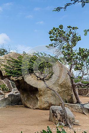 Free Boulder And Divi Divi Tree Stock Photos - 74367843