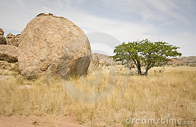 Boulder and Tree