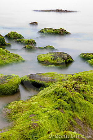Boulders covered with green seaweed in misty sea
