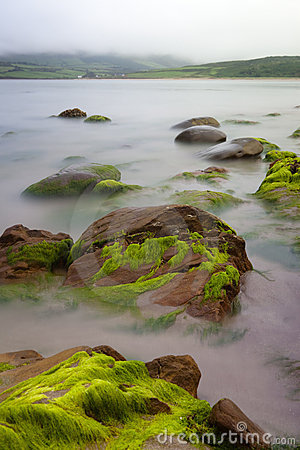 Boulders covered green seaweed in misty sea