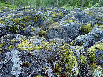 Boulders covered in moss