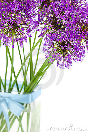 Bouqet of Allium / isolated on white