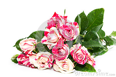 Bouquet of beautiful roses.