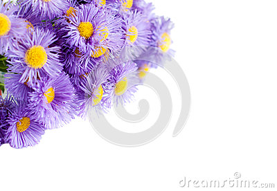 Bouquet of blue flowers on a white background