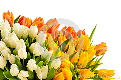 Bouquet of colorful tulip flowers spring freshness