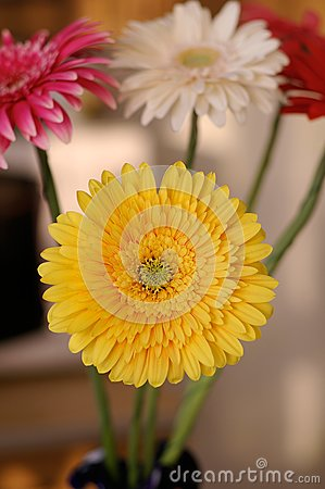 Bouquet from the daisies