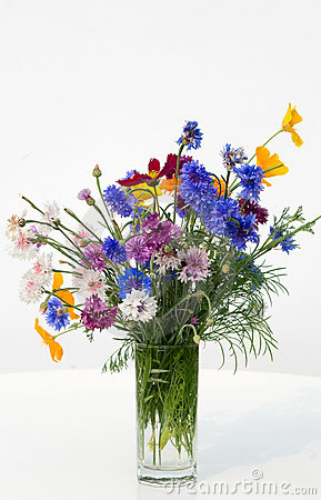 Bouquet of dark blue cornflowers
