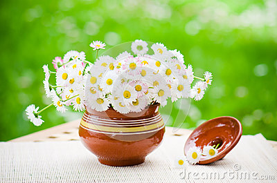 Bouquet of delicate daisies in pot at the table