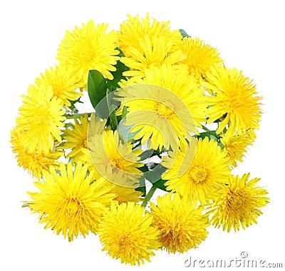 Bouquet des fleurs jaunes du pissenlit image libre de for Bouquet de fleurs jaunes