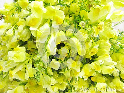 Bouquet of field yellow flowers