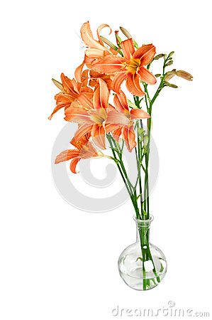 Bouquet of flower Lily on a white