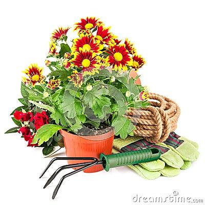 Bouquet flower in pot with garden tools