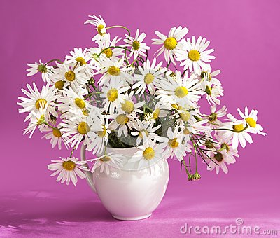 Bouquet of flowers camomile