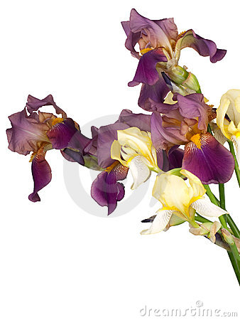 Bouquet from the flowers of iris