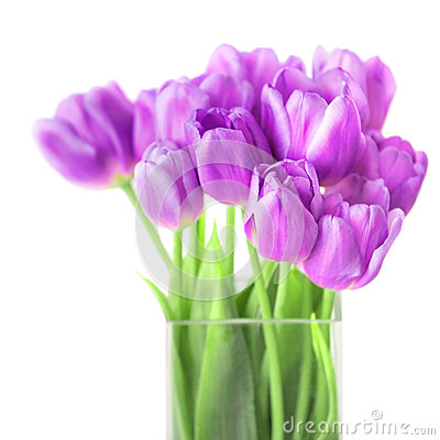 Bouquet of fresh violet tulips on white background