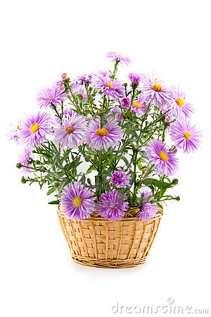 Free Bouquet In A Basket Royalty Free Stock Photography - 6899637