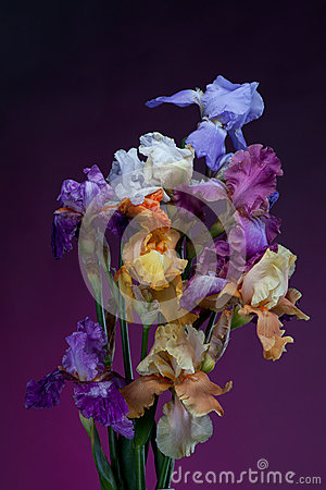 Bouquet of  iris flowers